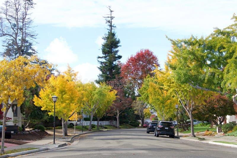 Grannskapgata som fodras med träd i höstfärger royaltyfri bild