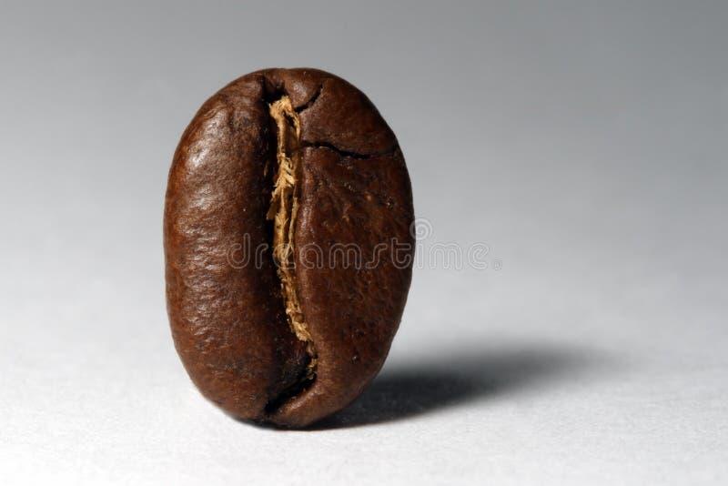 Download Grano de café imagen de archivo. Imagen de primer, grano - 7277811