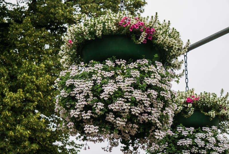 Grano de flores sobre un pilar con flores blancas de geranio imagen de archivo
