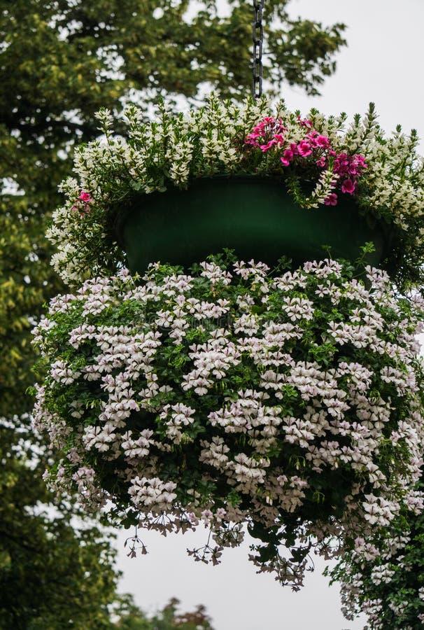 Grano de flores sobre un pilar con flores blancas de geranio fotos de archivo libres de regalías