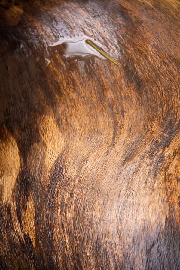 Grano de madera de Brown con el charco del agua fotografía de archivo