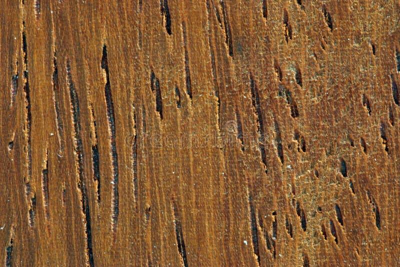 Grano de madera (caoba) fotografía de archivo
