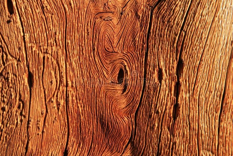 Grano de madera torcido foto de archivo libre de regalías
