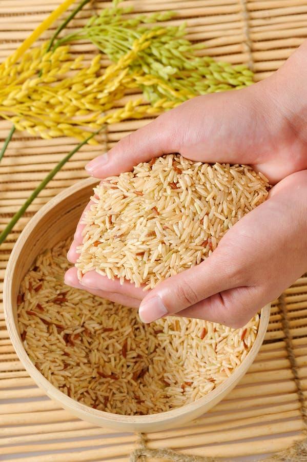 Grano del arroz con la mano de las mujeres foto de archivo