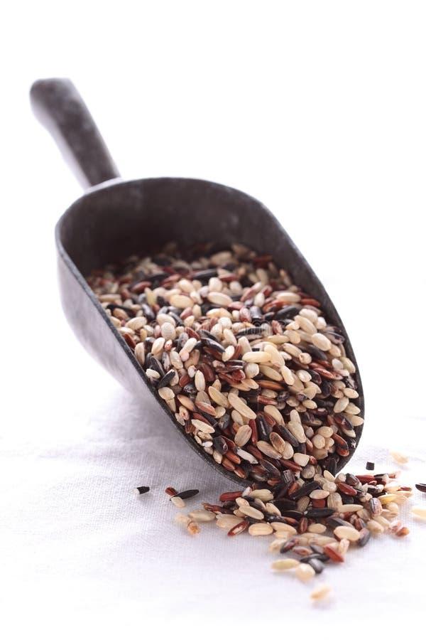 Grano del arroz en una cucharada. imagenes de archivo