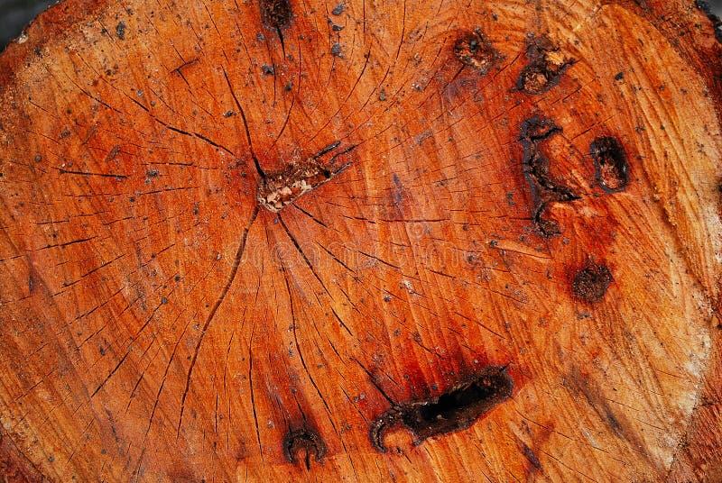 Grano di legno immagine stock libera da diritti