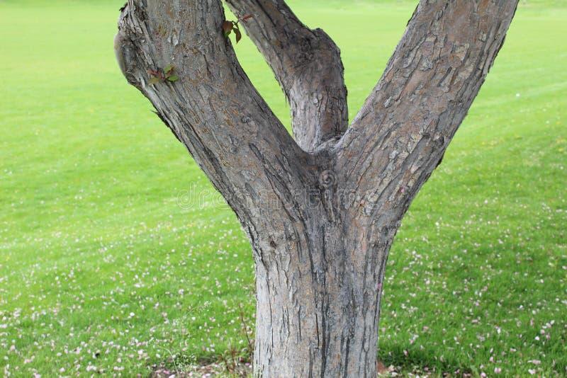 Grano di legno su erba fotografia stock