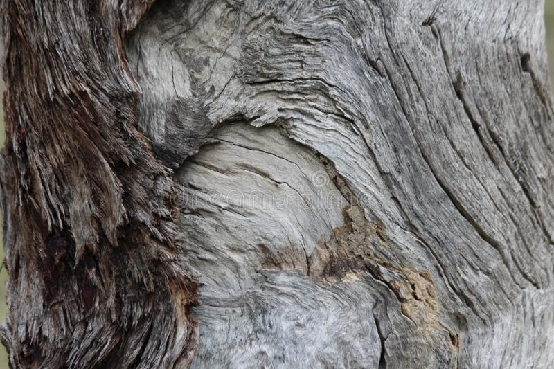 Grano en madera foto de archivo libre de regalías