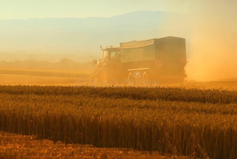 Grano a macchina del cereale del raccolto della mietitrice fotografia stock libera da diritti