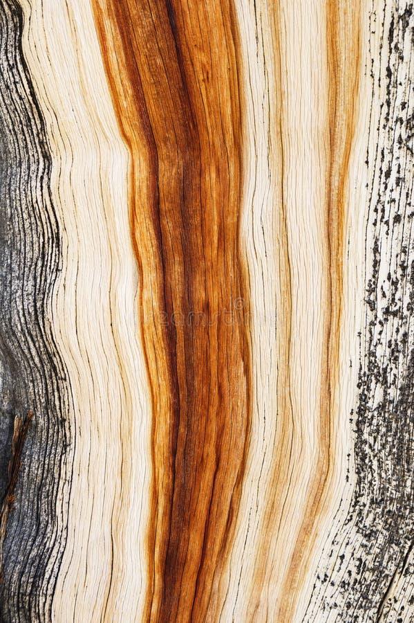 Grano resistido de madera de pino fotos de archivo
