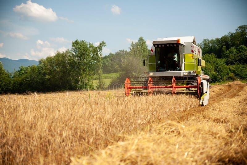Grano su un pomeriggio caldo di estate - agricultur di mietitrebbiatura immagini stock