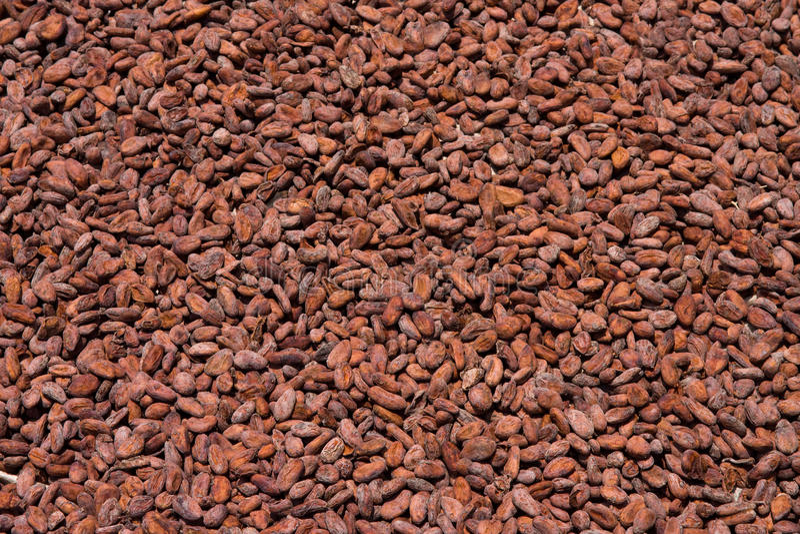 Granos de cacao foto de archivo libre de regalías