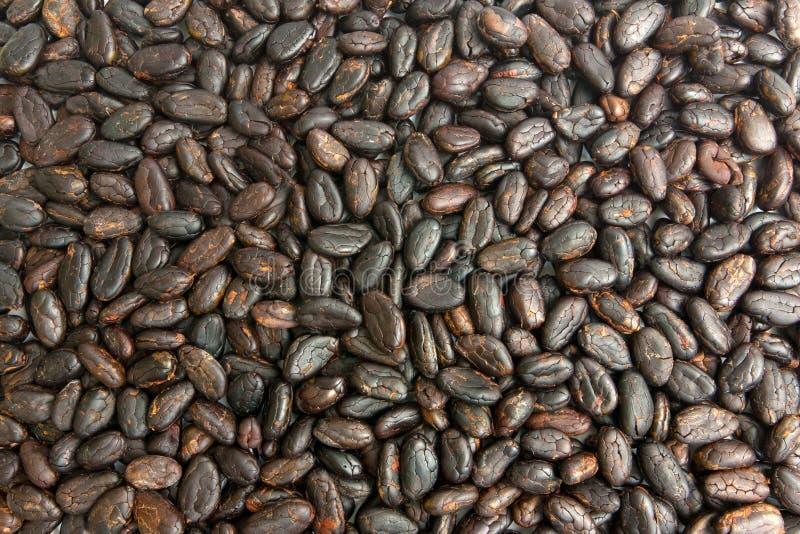 Granos de cacao fotos de archivo
