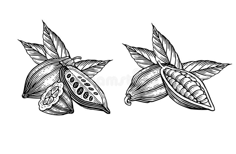 Granos de cacao stock de ilustración