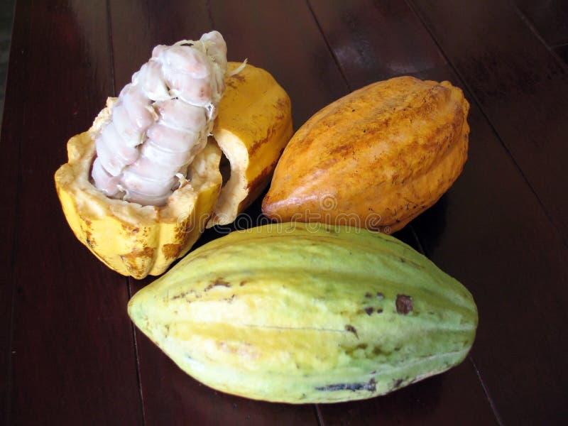 Granos de cacao foto de archivo