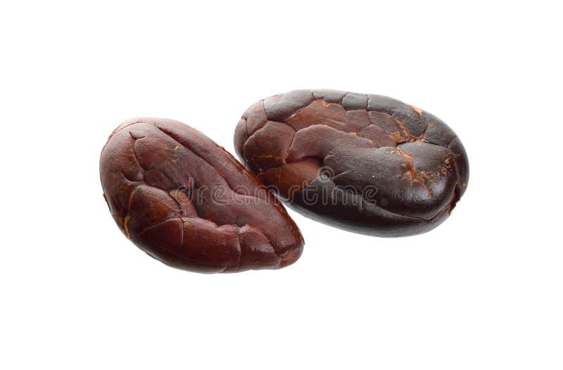 Granos de cacao asados aislados en el fondo blanco Departamento completo del campo foto de archivo libre de regalías
