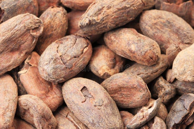 Granos de cacao macros fotografía de archivo