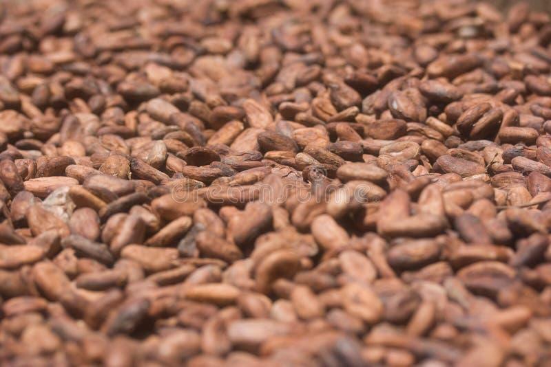 Granos de cacao secados al sol imagenes de archivo