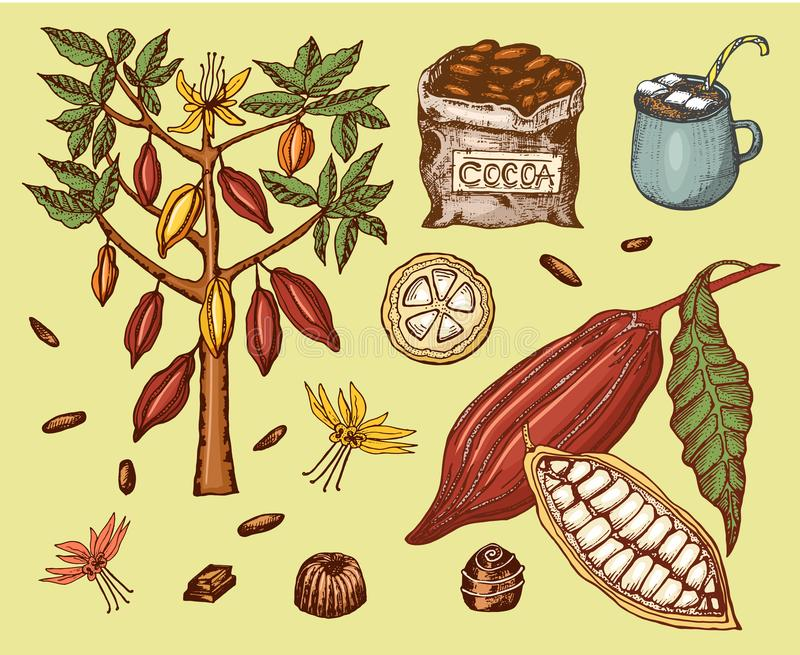 Granos de cacao y chocolate caliente Producto orgánico natural Semillas de la fruta en la plantación Árbol y un bolso viejo con l libre illustration