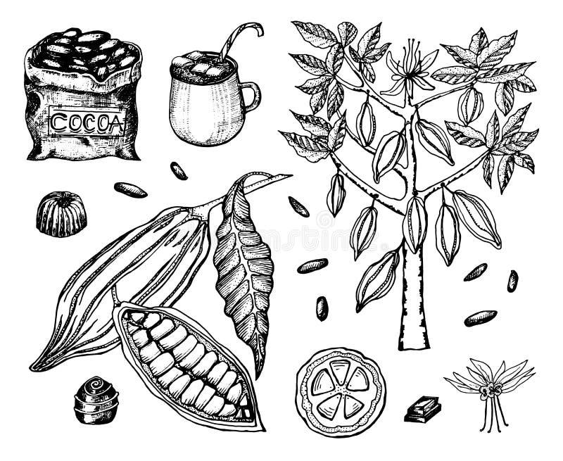 Granos de cacao y chocolate caliente Producto orgánico natural Semillas de la fruta en la plantación Fruta madura, árbol y un vie stock de ilustración