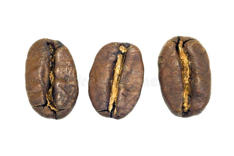 Download Granos de café foto de archivo. Imagen de condimento, cafeína - 1280296