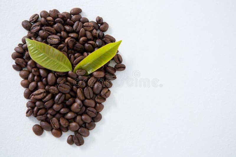 Granos de café asados dispuestos con las hojas foto de archivo