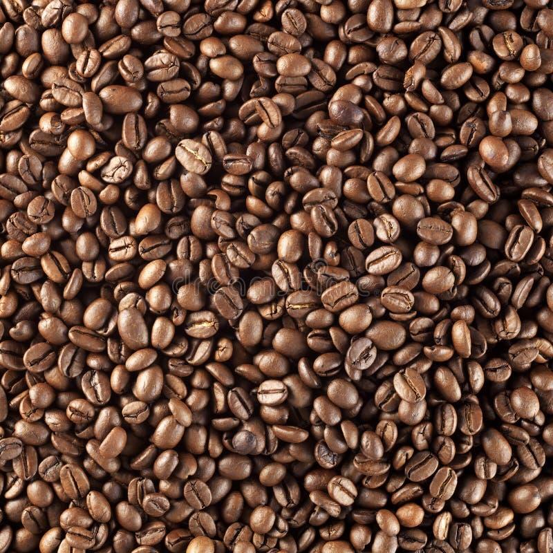 Granos de café asados frescos foto de archivo libre de regalías