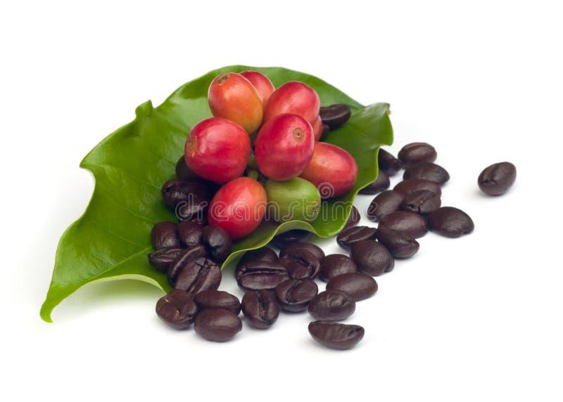 Granos de café con la hoja. imagenes de archivo