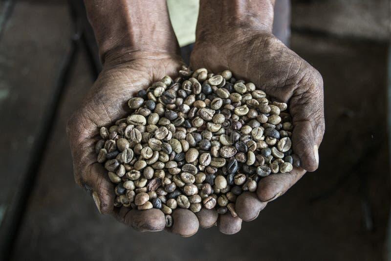 Granos de café con las manos imagenes de archivo