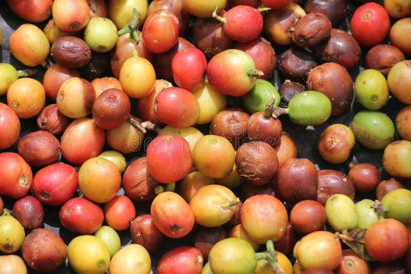 Granos de café Cuba imagen de archivo libre de regalías