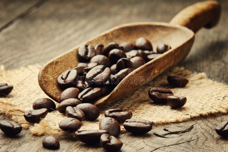 Granos de café en cucharada imágenes de archivo libres de regalías