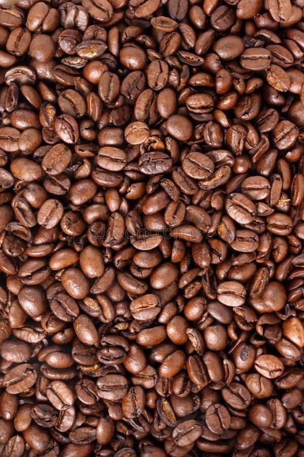 Granos de café - medio fotos de archivo