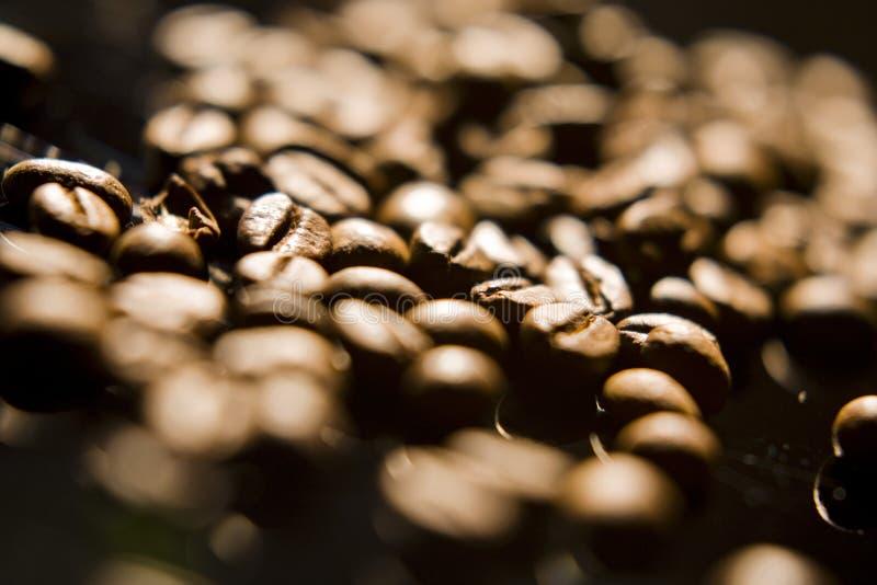 Granos de café, primer fotografía de archivo libre de regalías