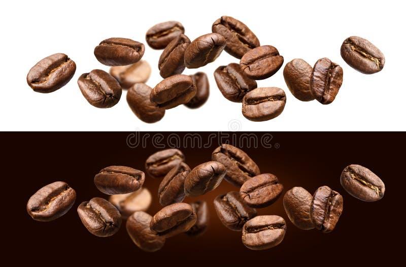 Granos de café que caen aislados en el fondo blanco y negro imagen de archivo