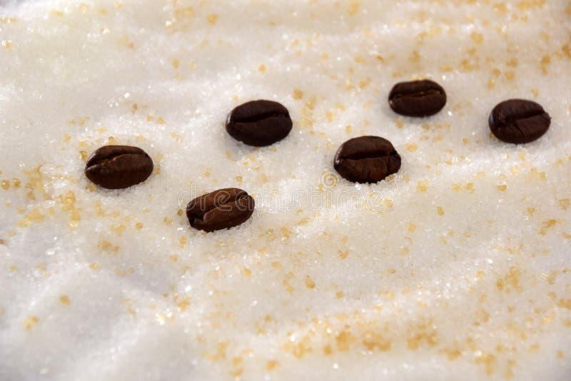 Granos de café que caminan en el campo del azúcar foto de archivo