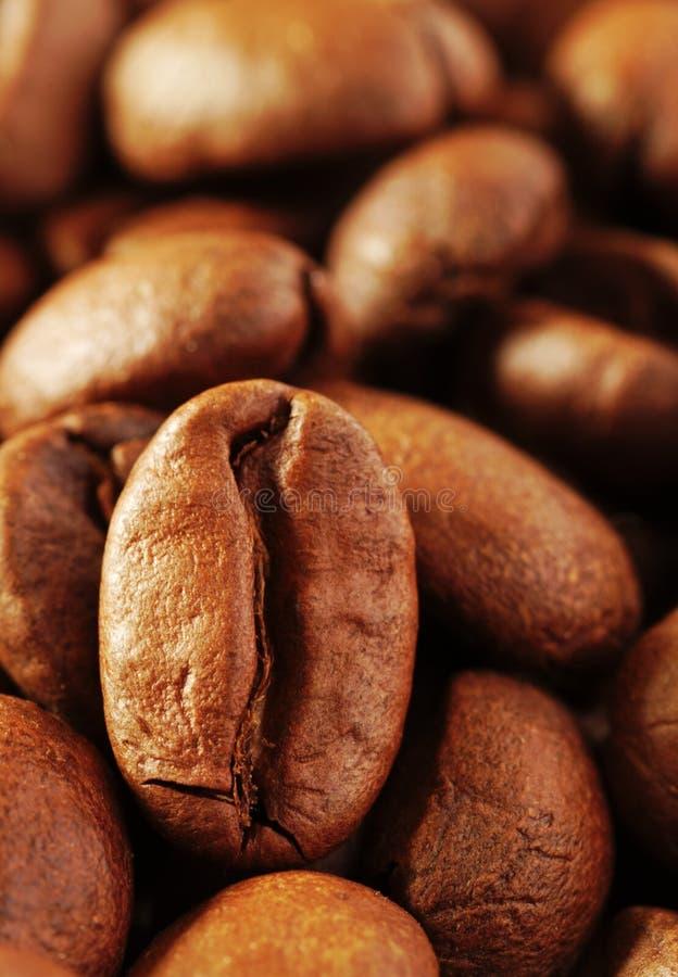 Granos de café tres fotos de archivo
