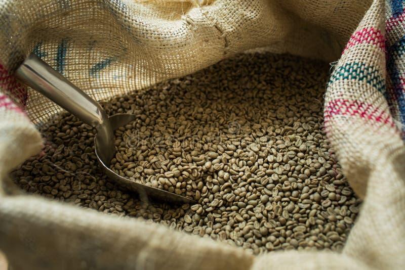 Granos de café verdes imágenes de archivo libres de regalías