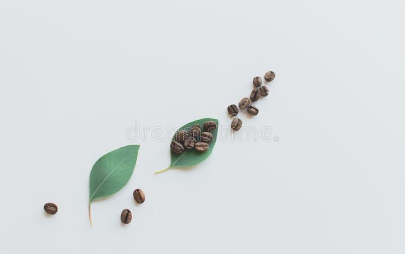 Granos de caf? en una hoja verde imagenes de archivo