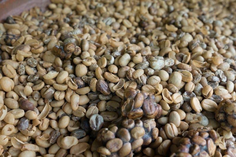 Granos de caf? de Luwak fotografía de archivo