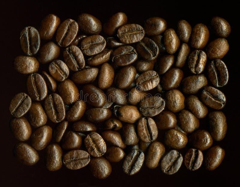 Granos de Coffe foto de archivo
