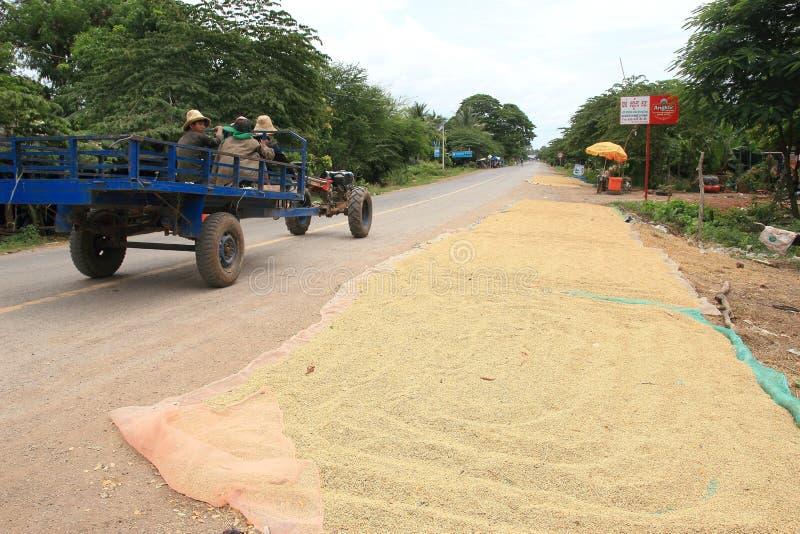 Granos de sequía del arroz en un camino en Camboya imagenes de archivo