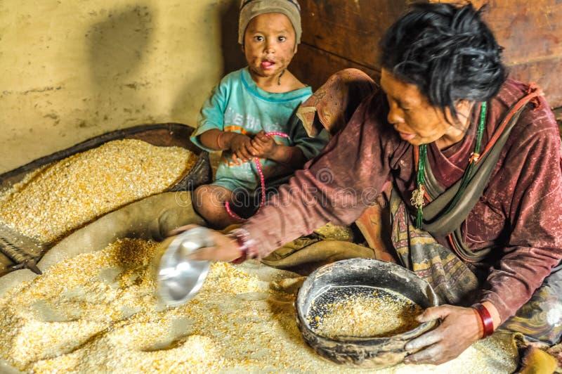 Granos del maíz en Nepal fotos de archivo