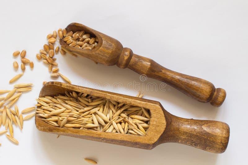Granos del trigo en pequeña cuchara de madera Granos de la avena imágenes de archivo libres de regalías