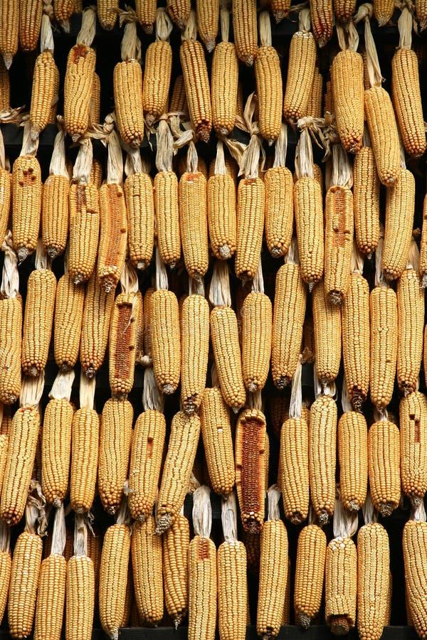 Granos secados en Croatia imagen de archivo libre de regalías