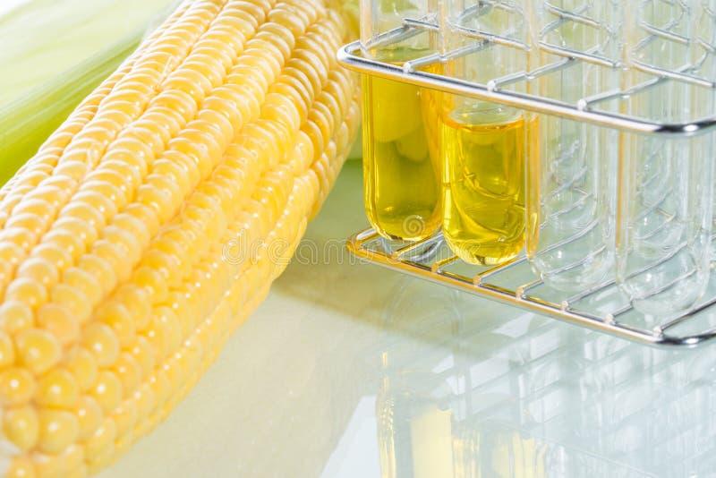 Granoturco dolce dello sciroppo di amido o del combustibile biologico immagini stock libere da diritti