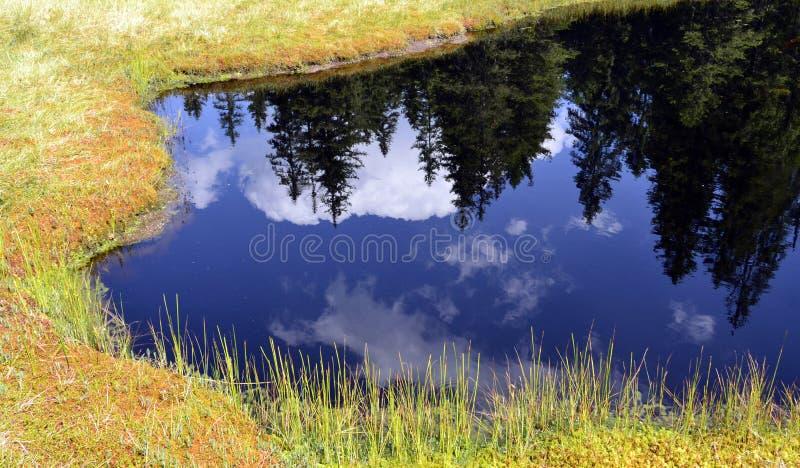 Granreflexion i stillheten, blått vatten av en bergsjö royaltyfria bilder