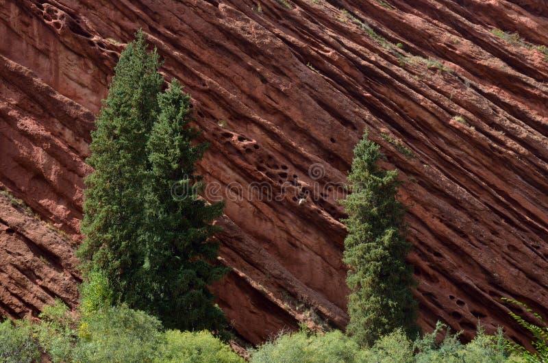 Granskogen nära rött vaggar av den Jeti Oguz för sju tjurar kanjonen arkivfoto