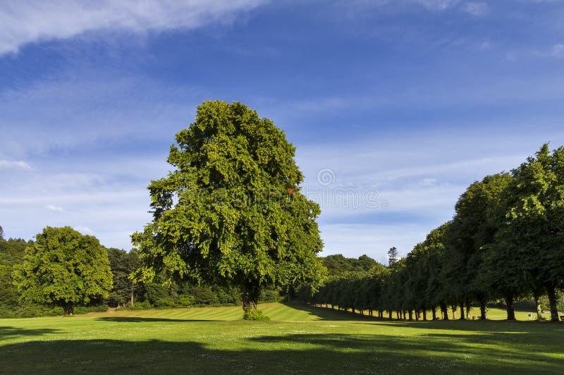 Download Grant Park, Forres. stock image. Image of grass, highlands - 34295833