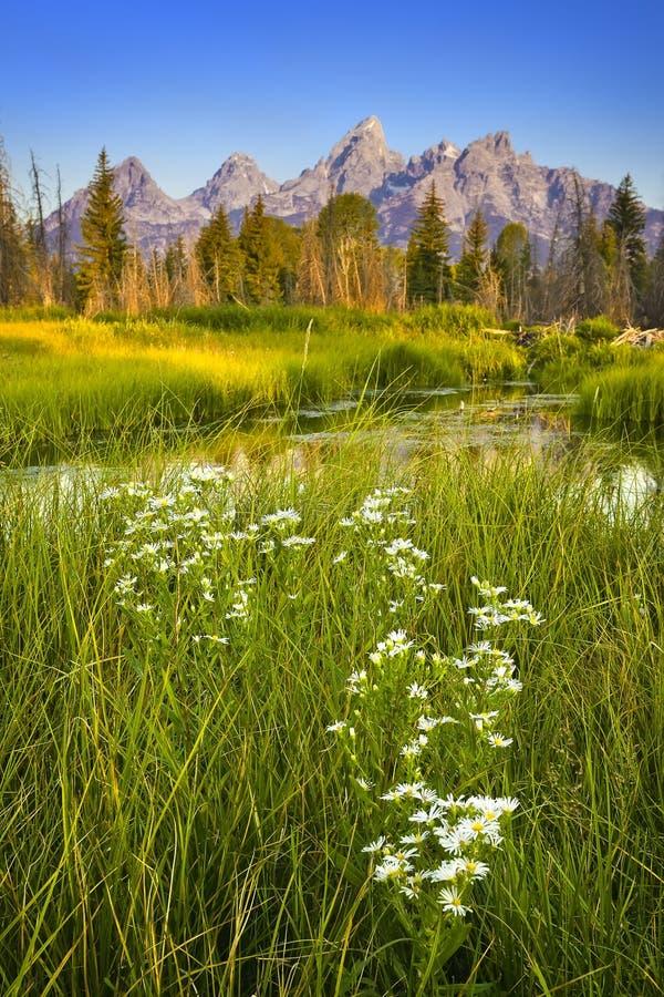 Download Grant teton national park stock image. Image of mountains - 26799675