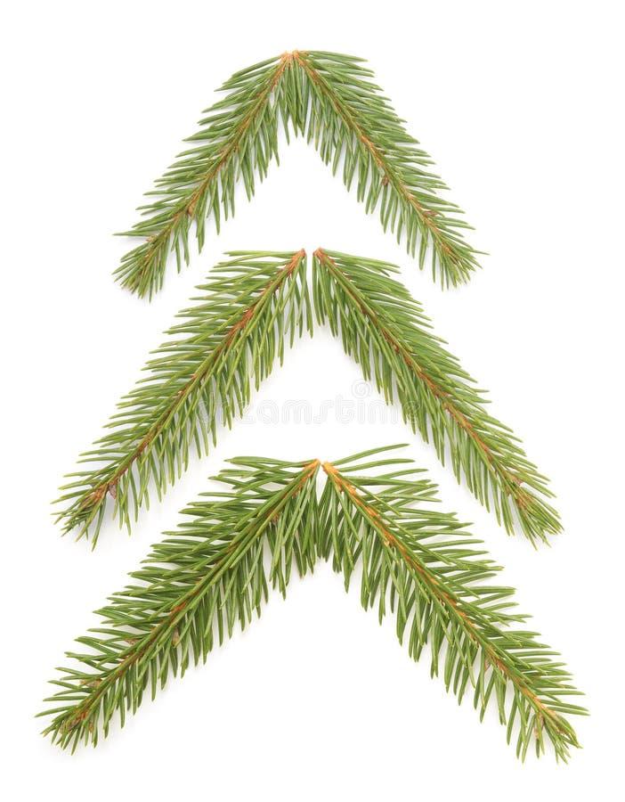 Granträd royaltyfri fotografi
